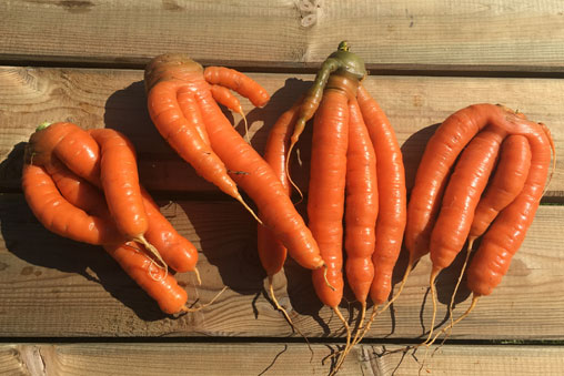 carottes_a_jus bio